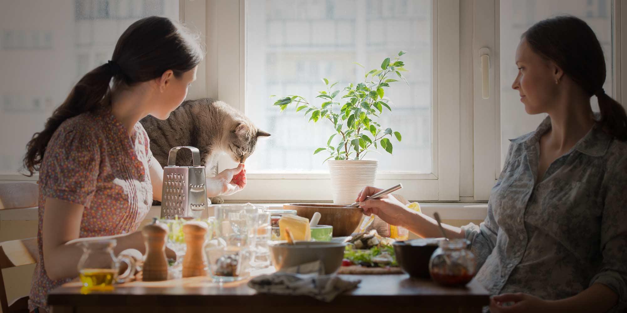 Seven Foods Your Cat Should Never Eat