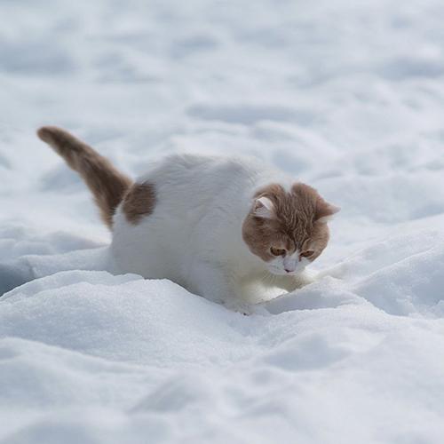kitty_snow500