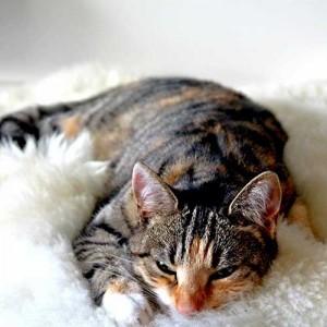 comfy-cat-266784_500x500