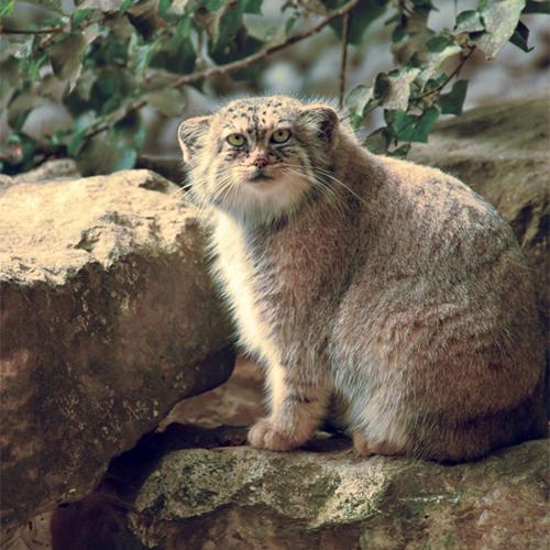 cat-1910982_500x500