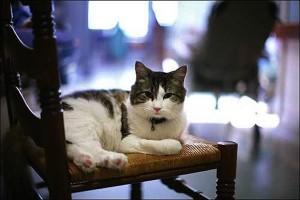 Catster-Oscar-the-Cat-2