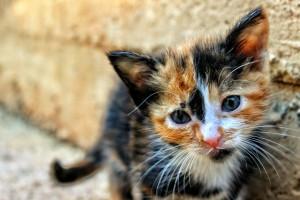Feral_Kitty_04