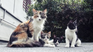 Feral_Kitty_03