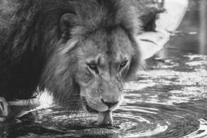 animal-animal-photography-big-209051