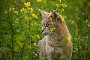 adorable-animal-cat-236603