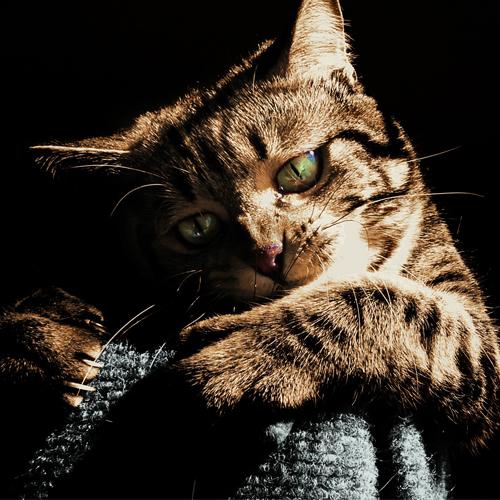 adorable-animal-cat-236584 500x500