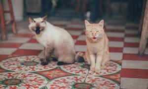 animal-animal-photography-cats-1003993