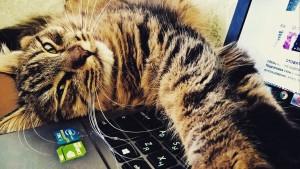 cat-2374290