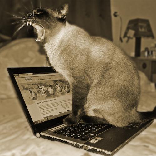 Cat Laptop 500x500