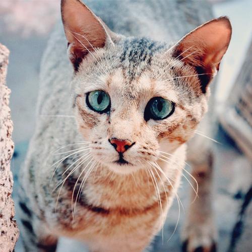 Blog_2018-05-09_Sad Cat 500x500