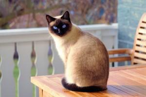 adorable-animal-blur-326875