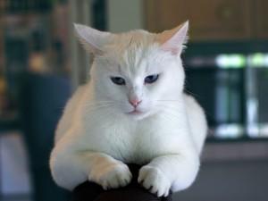 animal-cat-kitten-7517