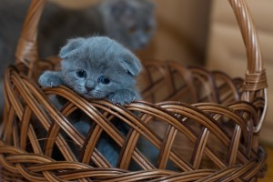 adorable-animal-basket-127027