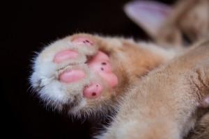 cat-1935104_1920