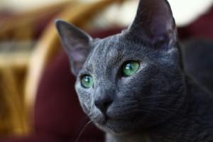 cat-1910266