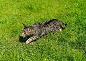 cat-1365648
