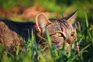 cat-1337106
