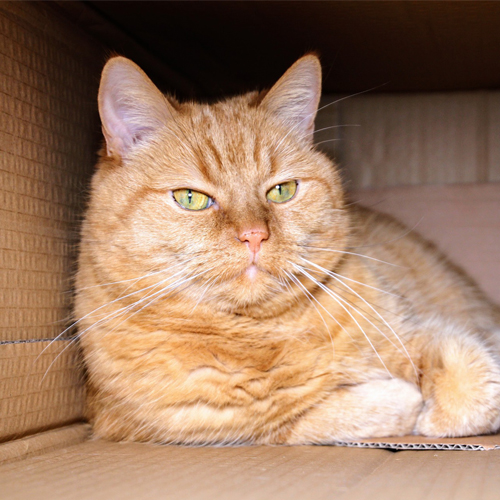 Fussie Cats in Boxes_cat-1999679_1920 500x500
