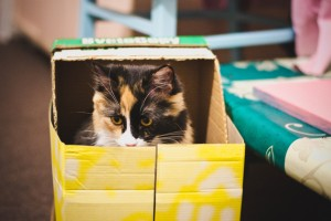 Fussie Cats in Boxes_cat-650770_1920