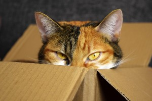 Fussie Cats in Boxes_lucky-cat-2780044_1920