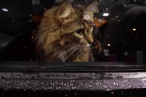 cat-1575650_1920
