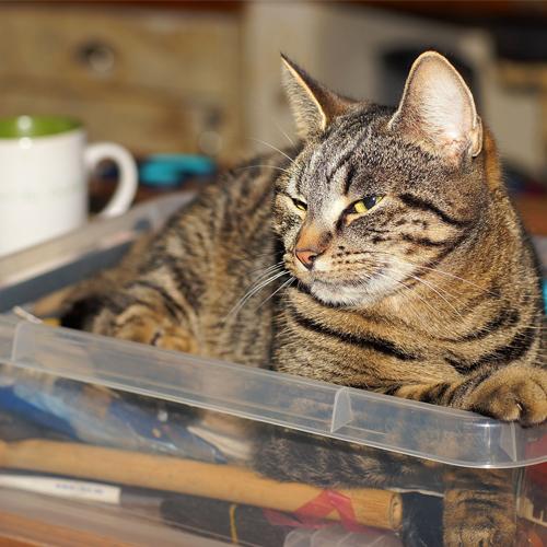 3_BLOG_cat indoors 500x500