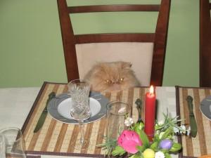 cat-376910_1920