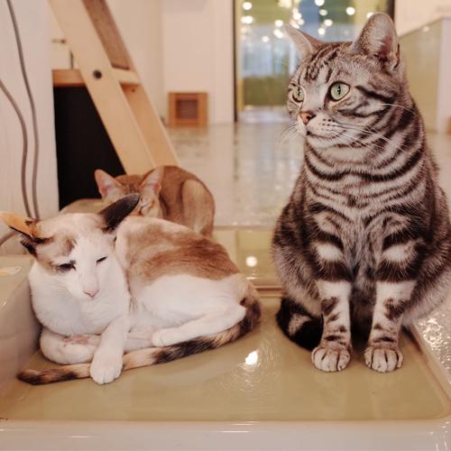 3_BLOG_cat cafe 500x500