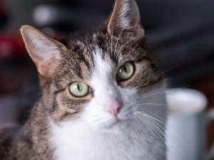 cat-1353052_1920