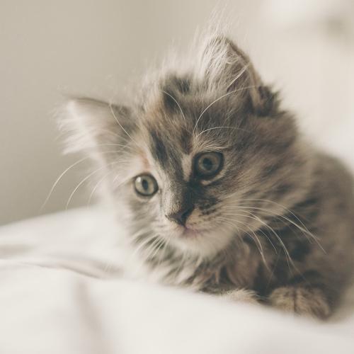 kitten-1031261_1920 500x500
