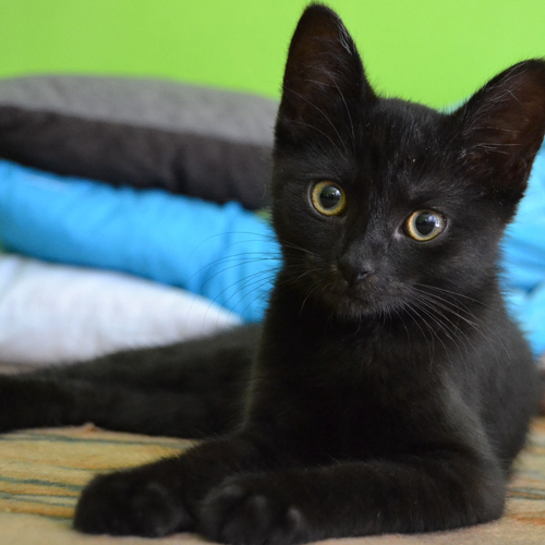 3_BLOG_black cat-907749_1920 500x500