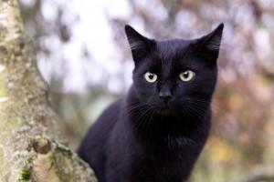 cat-2902599_1920