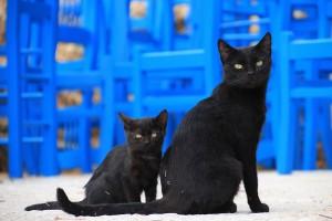 cat-1165112_1920