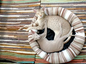 cat-202071_1920