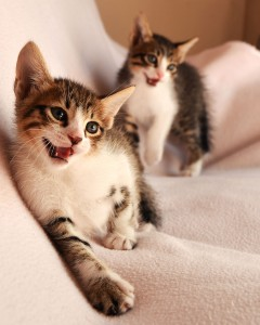 cats-2472764_1920