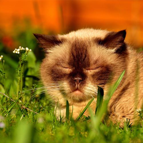 03_Blog_cat-2288694_1920 500x500