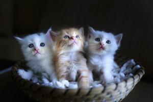 cat-3266675_1920