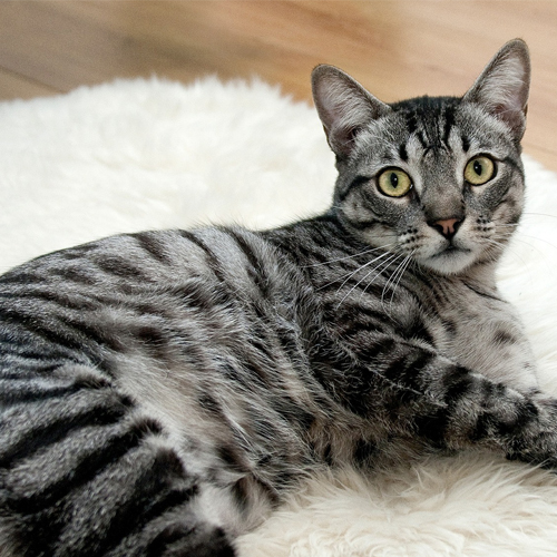 03_BLOG_cat-468232_1920 500x500