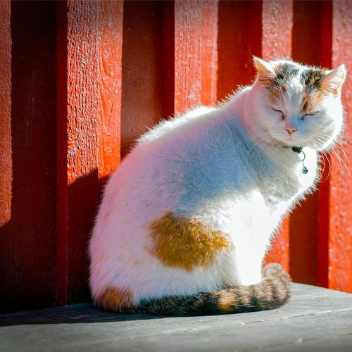 03_Blog_cat-1276644_1920 500x500