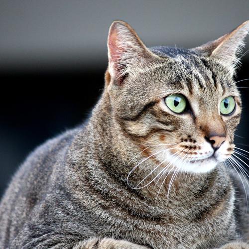 03_BLOG_cat-3558562_1920 500x500