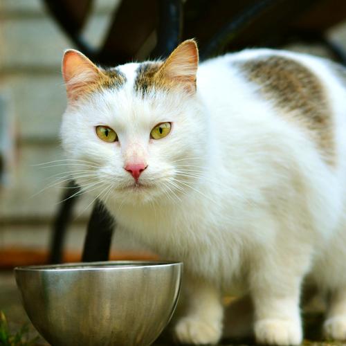 03_BLOG_cat-3159694_1920 500x500