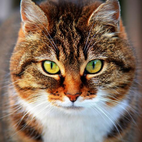 03_Blog_cat-300572_1920 500x500