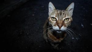 old-cat-1390365_1920