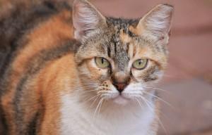 cat-89008_1920