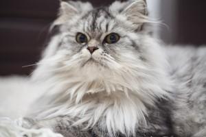 cat-2857049_1920