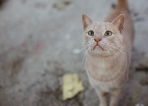 cat-2927966_1920