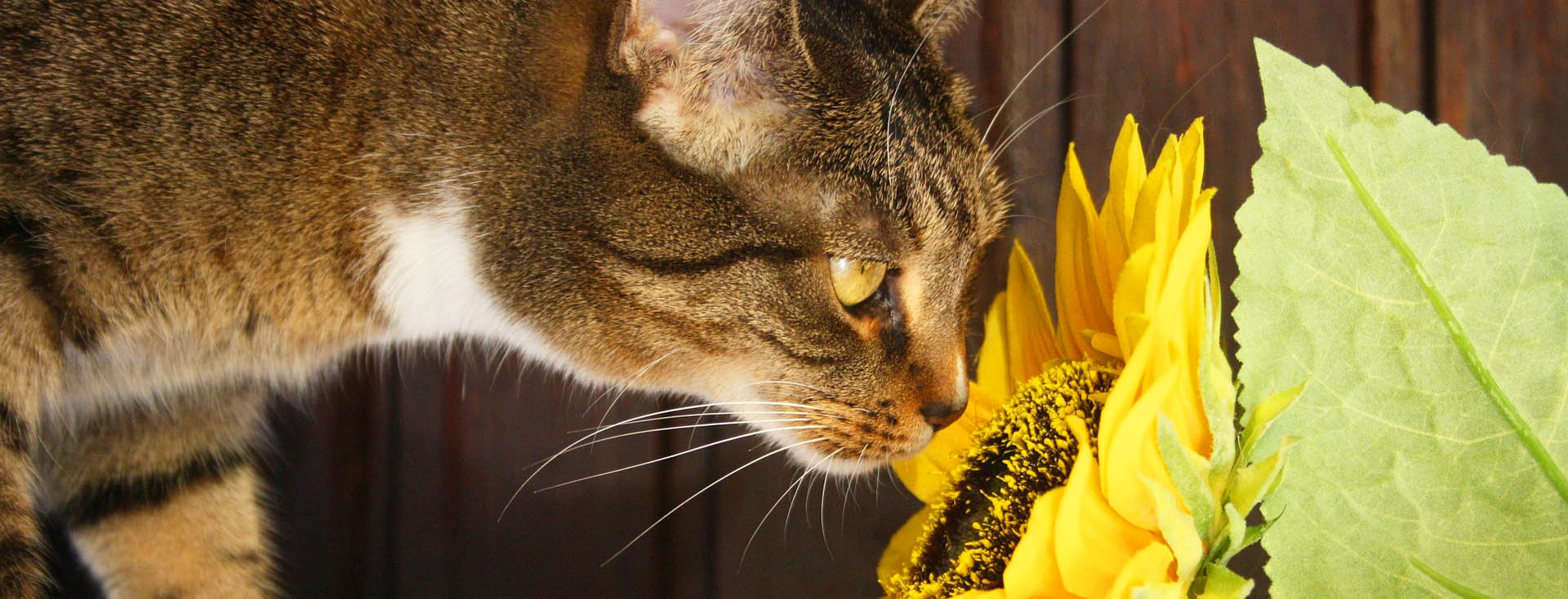 Cats & Plants: What to Avoid