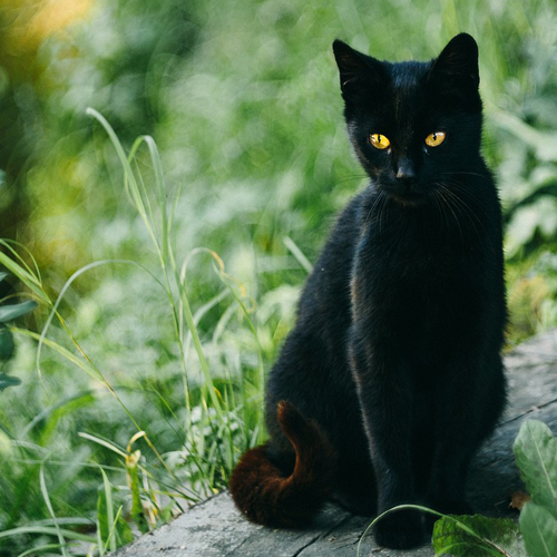 03_Blog_black cat_animals-2939726_1920 500x500