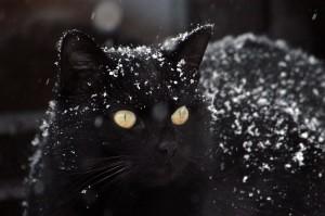 cat-1977416_1920