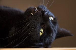 cat-1332740_1920